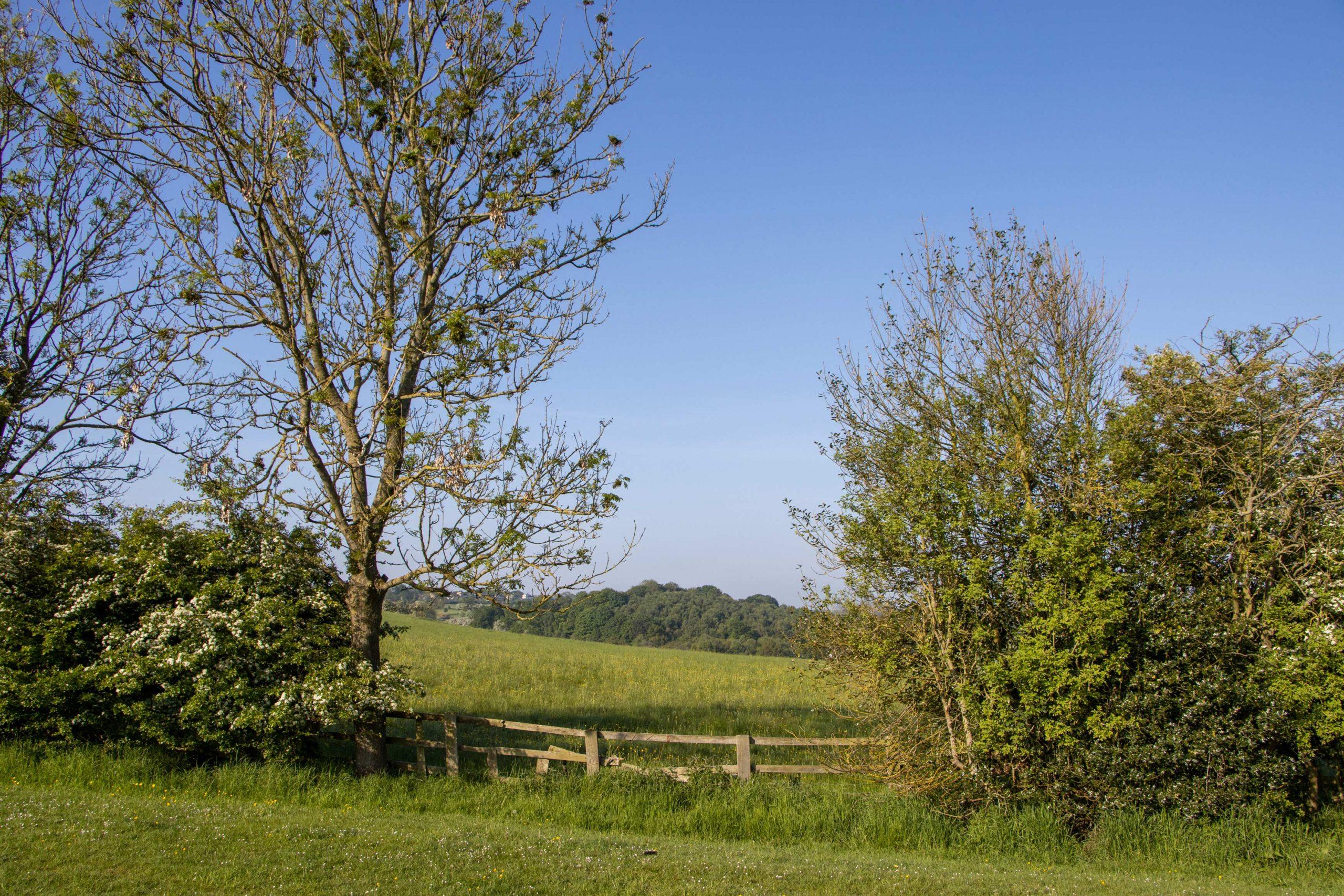 Countryside Surroundings